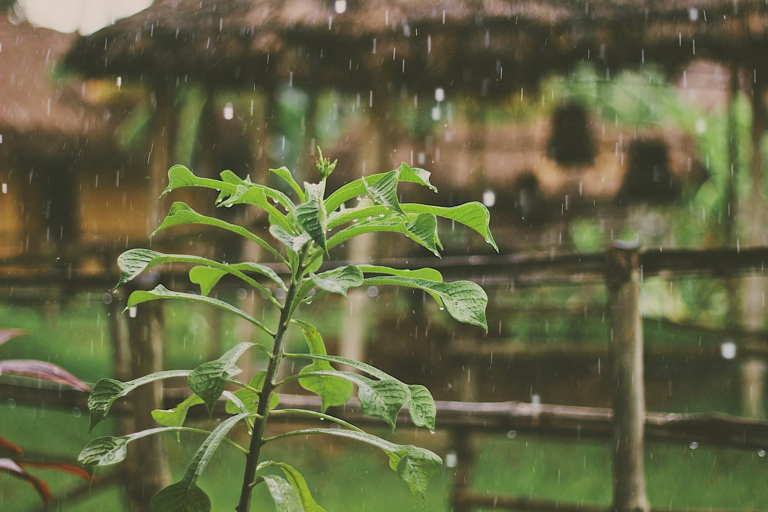 eau-de-pluie